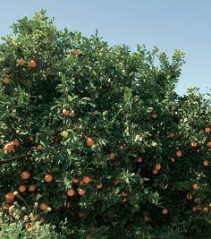 La Natura si manifesta in tutta la sua bellezza alla Cooperativa Agri Bio L'Arcobaleno Fruit