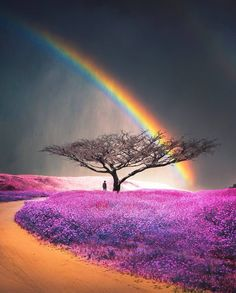 Rainbow from Lorna Rankin Rainbow Magic, Rainbow Sky, Love Rainbow, Over The Rainbow, Rainbow Colors, Beautiful Places, Beautiful Pictures, Rainbow Wallpaper, Rainbow Aesthetic