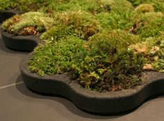 moss carpet for indoors