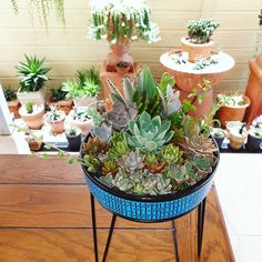 Succulents Garden, Pots, Cactus, Lady, How To Make, Instagram, Cactus Plants, Planters