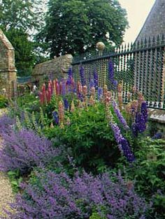Pretty Catmint Edging