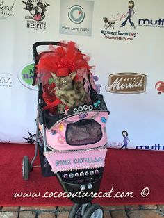 Coco, the Couture Cat: Monday Mewsings, #WiggleButts Uncorked Finale Post... Pet Fashion, Fundraising, Couture, Cat, Cat Breeds, Haute Couture, Cats, Kitty, Fundraisers