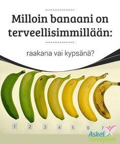 Milloin banaani on terveellisimmillään: raakana vai kypsänä?  Banaaneja syödään maailmalla #tonneittain ja banaani on yksi #suosituimmista hedelmistä ympäri #maailmaa.  #Terveellisetelämäntavat