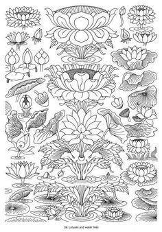 lotus blossoms and water lilies: