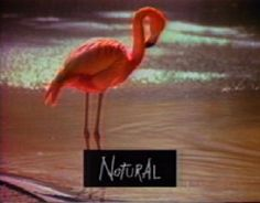 Read more: https://www.luerzersarchive.com/en/classic-spot-of-the-week/2014-17.html Natural/Artifical Ready meals, plastic flamingos and a dodgy wig. A stream of contrasting images sets up the payoff for Soho Soda: 'A natural drink for an artificial world.' Tags: Mike Shine,John Butler,TBWA\Chiat\Day, New York,Soho Natural Soda,Six Shooter Films, New York,Buckwheat Zydeco