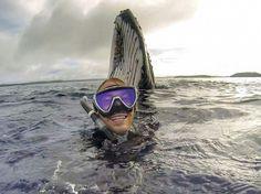 24 heures en images - Le selfie de Will Rosner avec une baleine
