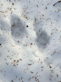 Dyrespor i sneen er alltid herlig!