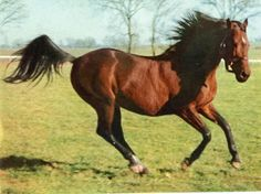 1943 Triple Crown winner Count Fleet. Count Fleet (March 24, 1940 - December 3, 1973) was born and died at Stoner Creek Stud farm in Paris, Kentucky, United States. He was a Thoroughbred racehorse and Triple Crown champion in 1943.