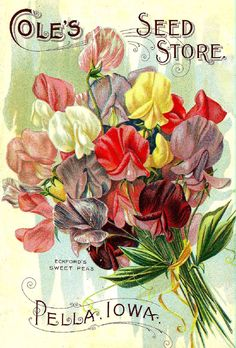 A simply stunning collection of 300 Print Ready images taken from beautifully illustrated vintage seed catalogue covers & Seed packets dating from the mid 1800's to the early 1900's. Only $5.00 with delivery to your inbox within hours! Payment via Paypal. Check out the other amazing collections and choose any 4 for only $15.00! Many thanks for dropping by, Greg :)