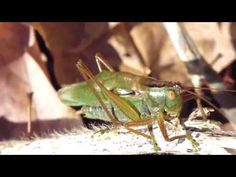Ag Science, Animal Help, Environmental Education, Summer 2015, Farm Animals, Woods, Pets, Blog, Blogging