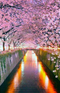 Sakura Tunnel Japan
