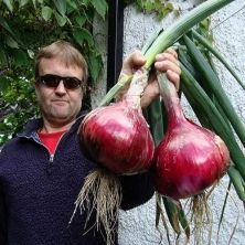 Giant Vegetables---10 pound mammoth onion seeds