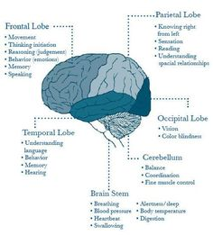 Brain Injury: How The Brain Functions ~ To help you better understand one's injury and show you the anatomy of the brain. Brain Stem, Brain Science, Life Science, Computer Science, Forensic Science, Brain Facts, Nursing Notes, Anatomy And Physiology, Brain Health