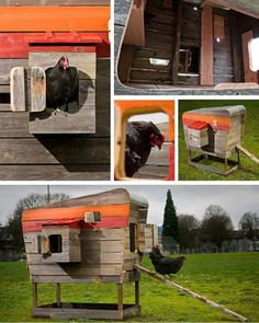 I did a triple take when I saw what one chicken lover constructed. Not quite an Airstream and not quite a vintage barn but basically a combo of the two, this coop has hens living in higher style th...