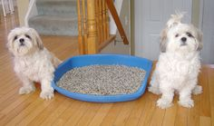 Indoor litter training for doggies, a great idea!