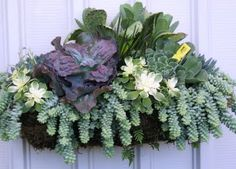 3 ft. wide gorgeous succulent arrangement created by a master gardener at Dana Point Nursery in California ~ FUNdemento blog