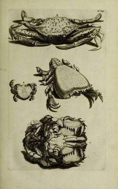 Thesaurus imaginum piscium testaceorum : - Biodiversity Heritage Library