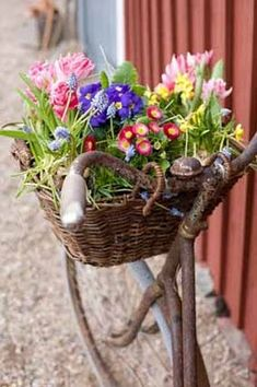 Old rusty bike with Spring flower basket