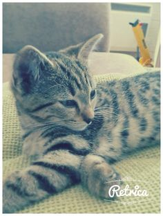 My kitten, Jac. Isn't she beautiful ❤