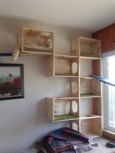Pet Clinic, Animal Clinic, Cat Wall Furniture, Cat Wall Shelves, Cat House Diy, Diy Cat Tree, Cat Towers, Cat Playground, Cat Enclosure