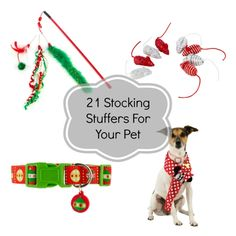 Pets want Santa to visit their stockings too! Find some great pet stocking stuffers with this list of small and affordable items.