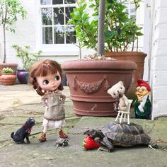 """""""Oh do look at Ted, he thinks he's magnificent ! Using our tortoise just like she's an elephant! Goodness me Ted, will you give it some slack! How would you like a chair stuck on your back!"""" #tortoise #indianelephant #gardengnome #simonealbergaria #moshimoshi #dakawaiidolls #dewdropteddybears #inkarno_art #garden #blythedoll #kawaii #dollphotography #teddybear #pet"""