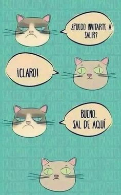 Funny Phrases, Funny Quotes, Funny Memes, Ugly Cat, Pet Life, Grumpy Cat, Wtf Funny, Cat Memes, Funny Posts