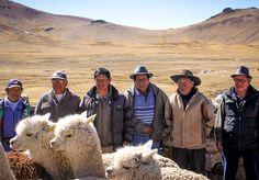 7 best top 6 reasons to love alpaca images fair trade  vectores sobre silueta f1