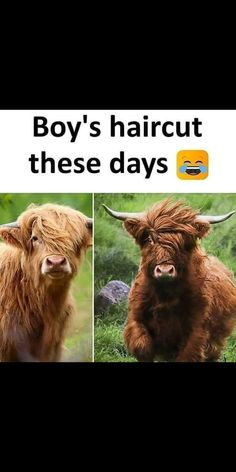 Funniest Animal Memes Of The Day That Are Extremely Hilarious Pics) - Page 2 of 4 - Awed! Funny Jokes In Hindi, Funny School Jokes, Very Funny Jokes, Funny Qoutes, Crazy Funny Memes, Really Funny Memes, Funny Relatable Memes, Funny Facts, Funny Statuses