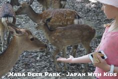 This post is part of a series from our recent holiday to Japan. You can read more about our adventures by clicking here – Japan With Kids. *********** We all adored the Nara Deer Park when we visited. Nara had been recommended to me by my dear friend Annie and also highly recommended by a …
