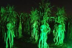 Aliens in the cornfield.