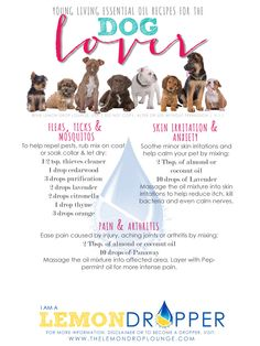 Young Living Essential Oils for dogs! Yes they can use them too! :) #YoungLivingEssentialOils #YLEO #LemonDropper #OilsForDogs #ADropADay Facebook.com/ADropADay