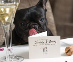 Planning your big day? Find out how you can support Dogs Trust when you tie the knot with these charitable dog-themed wedding favours. Charity Wedding Favors, Special Day, Special Gifts, Traditional Wedding Favours, Dog Charities, Support Dog, Dogs Trust, Dog Wedding, Wedding Ideas