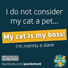 My cat is my boss!