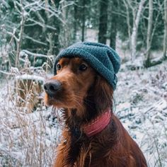 613121d8c34 22 Best Hipster Dog images