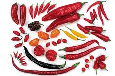 Peppers and chillies growing advice from the Royal Horticultural Society.  Originally pinned by Ramessed Meryamun.