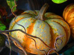 Pumpkin and vine.