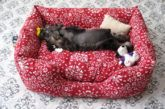 Pet Pillow Bed Free Patterns For Your Furbabies