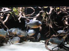 Aquarium:  Roquetas de Mar, Almería #