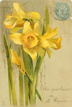 1904 Daffodils postcard illustrated by Catherine Klein