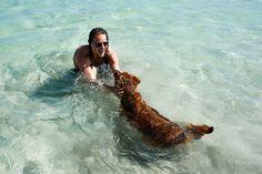 Beach dog in Vieques, Puerto Rico | Jarno Jussila. Photo from www.jarnojussila.com.
