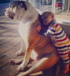 ❤ While ~TEX isn't a bully fur baby ~but his heart is! This capture of love is soooo very tender.  Posted on ELLEN's web site KIDS  PETS.  Post  Katie J. from Longwood, Florida sent in this photo of Brady and Tex. Has there ever been a cuter photo of true love? ❤