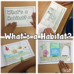What's a Habitat? little book. Great introduction to the concept of habitats around the world.