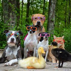 A família Boggs tornou-se uma sensação no Instagram com uma receita infalível para o sucesso: uma porção de animais simpáticos, convivendo em harmonia, vestindo roupas e acessórios como animados e felizes protagonistas das fotografias. Dois pit bulls, dois terriers, dois patos e um gato compõem o grupo que, não bastasse a simpatia, ainda ...