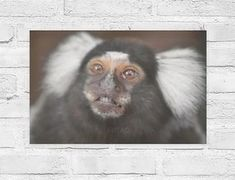 Beautiful poster of a funny monkey with big eyes in Costa Rica. A smooth, shine-free, matte finish. Beautiful Photos Of Nature, Beautiful Posters, Nature Photos, Big Eyes, Sloth, Travel Around The World, Costa Rica, Monkey, Nature Photography