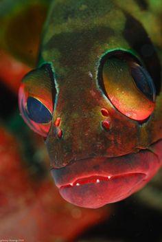 jenny huang. coral grouper