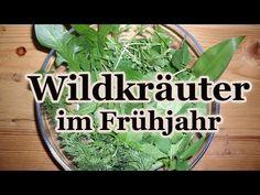 Essbare Wildkräuter im Frühjahr - Was wächst da vor meiner Haustür? - YouTube