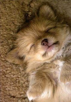 I like to match whatever I am sleeping on....so cute.