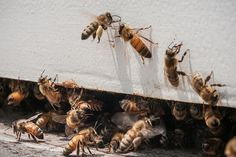 Killer bee attack saves a woman's life and inspires amazing product | Washington Times Communities