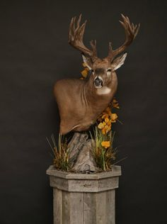 Whitetail — Orion Taxidermy The Effective Pictures We Offer You About Hunting Room diy A quality pic Deer Hunting Decor, Deer Head Decor, Whitetail Deer Hunting, Deer Camp, Taxidermy Decor, Taxidermy Display, World Of Interiors, Deer Pictures, Deer Pics
